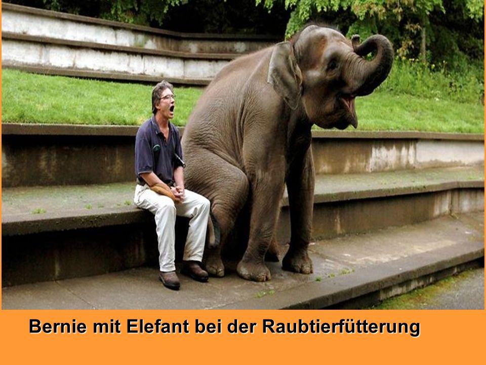 Bernie mit Elefant bei der Raubtierfütterung