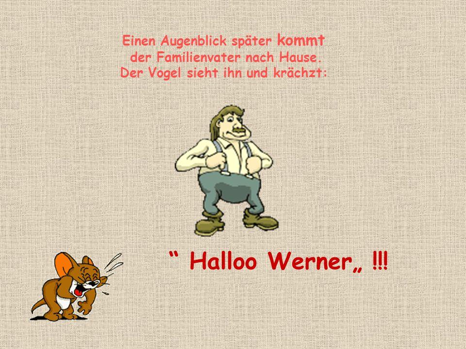 Einen Augenblick später kommt der Familienvater nach Hause. Der Vogel sieht ihn und krächzt: Halloo Werner !!!