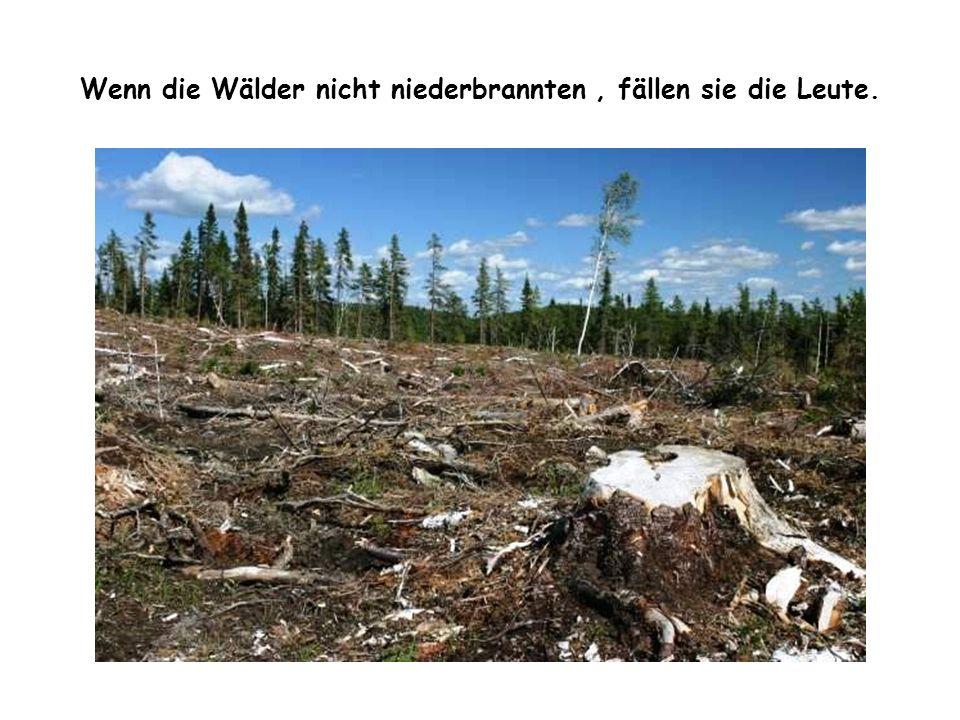 Wenn die Wälder nicht niederbrannten, fällen sie die Leute.