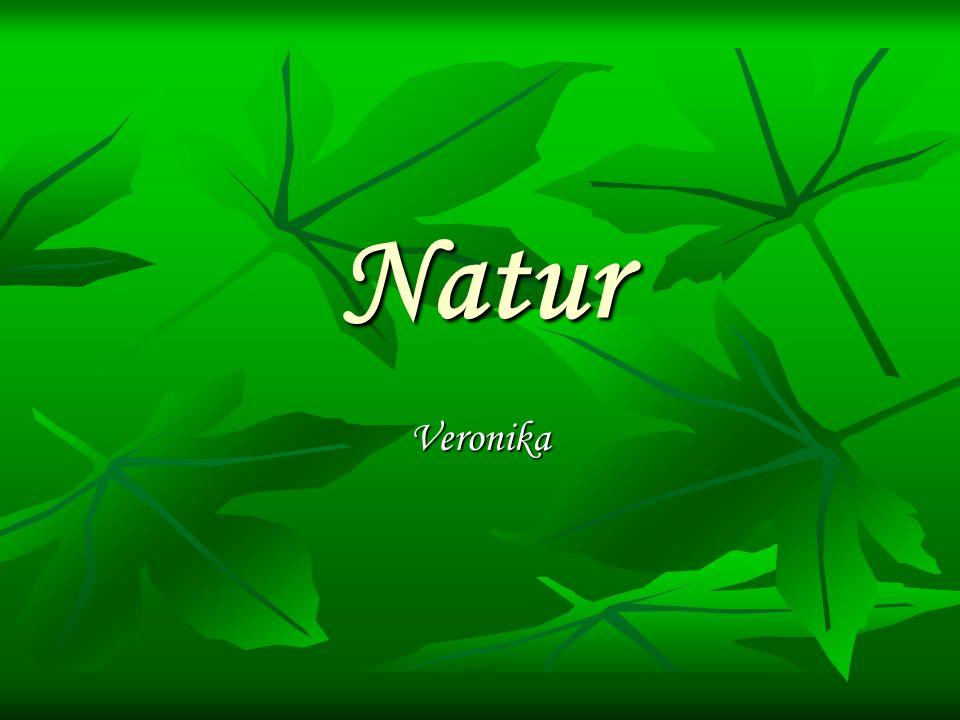 Natur Veronika