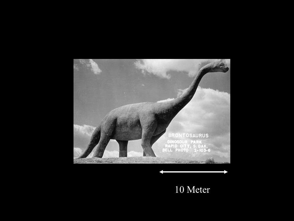 10 Meter