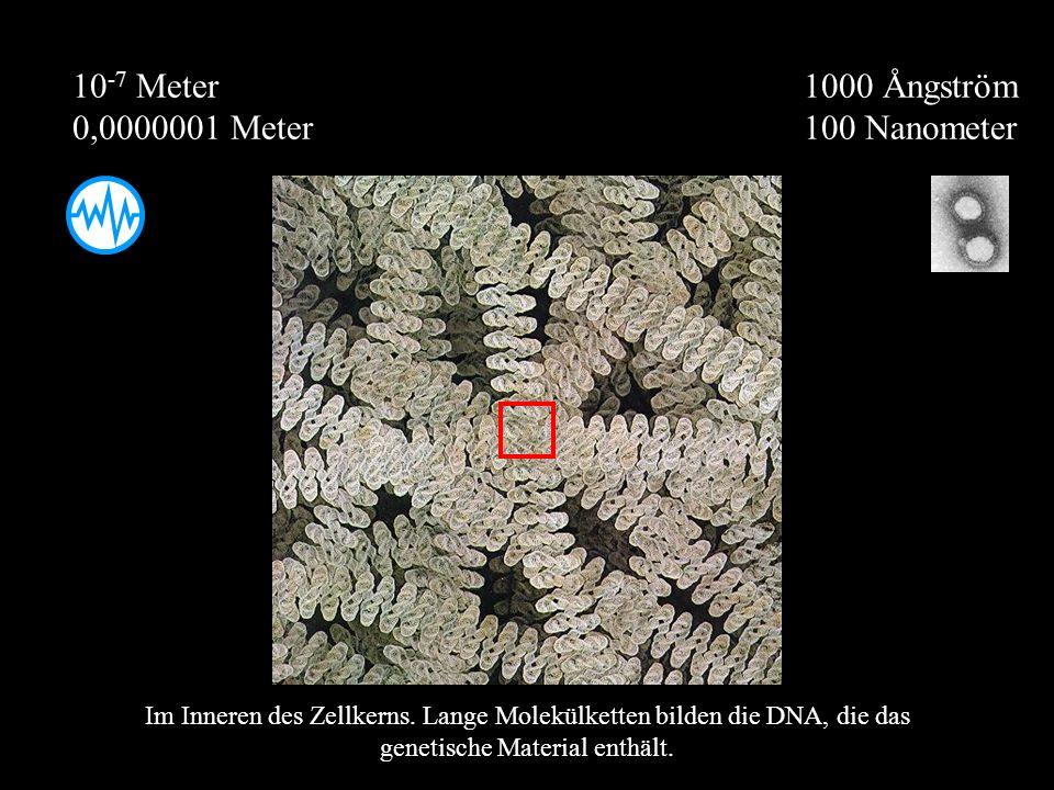 1000 Ångström 100 Nanometer 10 -7 Meter 0,0000001 Meter Im Inneren des Zellkerns. Lange Molekülketten bilden die DNA, die das genetische Material enth