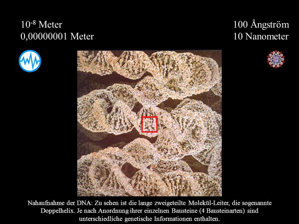 100 Ångström 10 Nanometer 10 -8 Meter 0,00000001 Meter Nahaufnahme der DNA: Zu sehen ist die lange zweigeteilte Molekül-Leiter, die sogenannte Doppelh