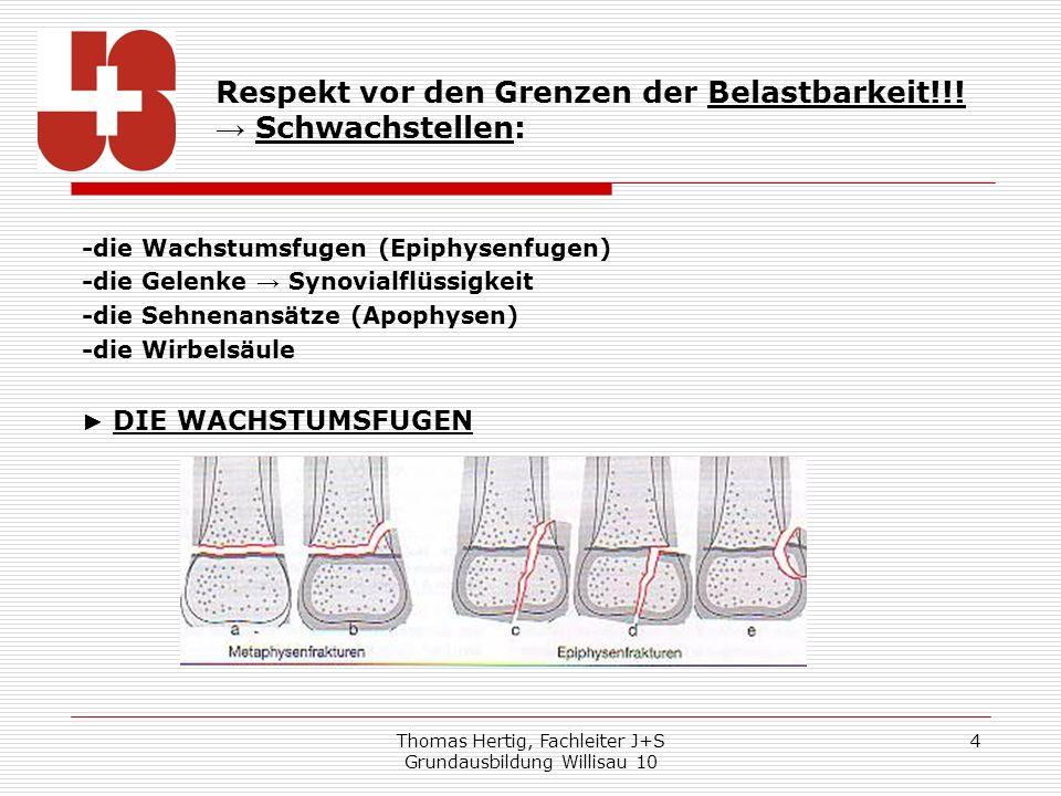 Thomas Hertig, Fachleiter J+S Grundausbildung Willisau 10 4 -die Wachstumsfugen (Epiphysenfugen) -die Gelenke Synovialflüssigkeit -die Sehnenansätze (