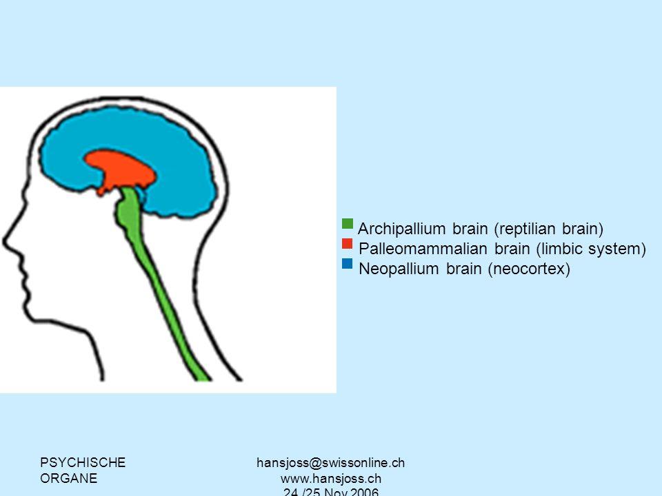 PSYCHISCHE ORGANE hansjoss@swissonline.ch www.hansjoss.ch 24./25.Nov.2006 Archipallium brain (reptilian brain) Palleomammalian brain (limbic system) N