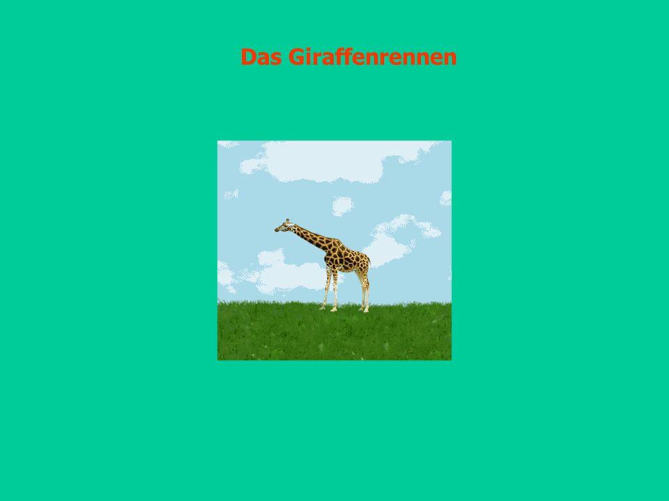 Das Giraffenrennen