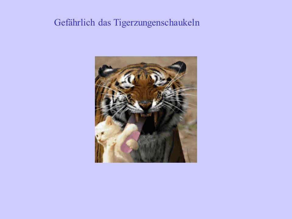 Gefährlich das Tigerzungenschaukeln