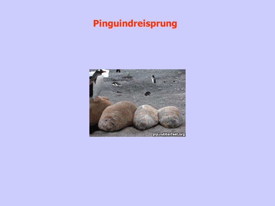 Pinguindreisprung