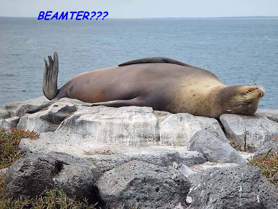 BEAMTER???