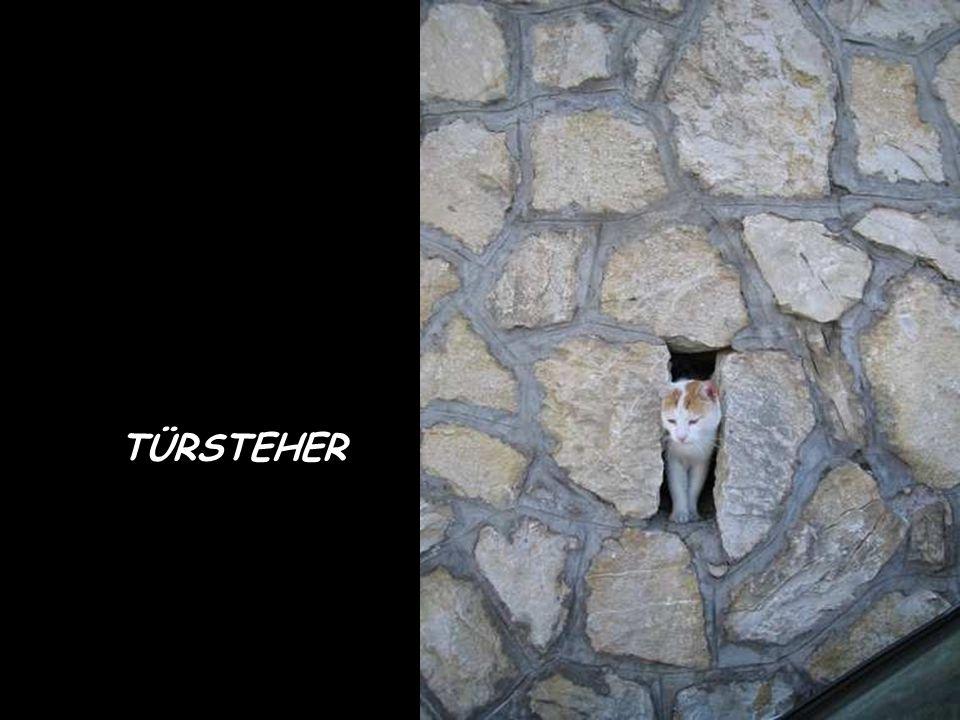 TÜRSTEHER
