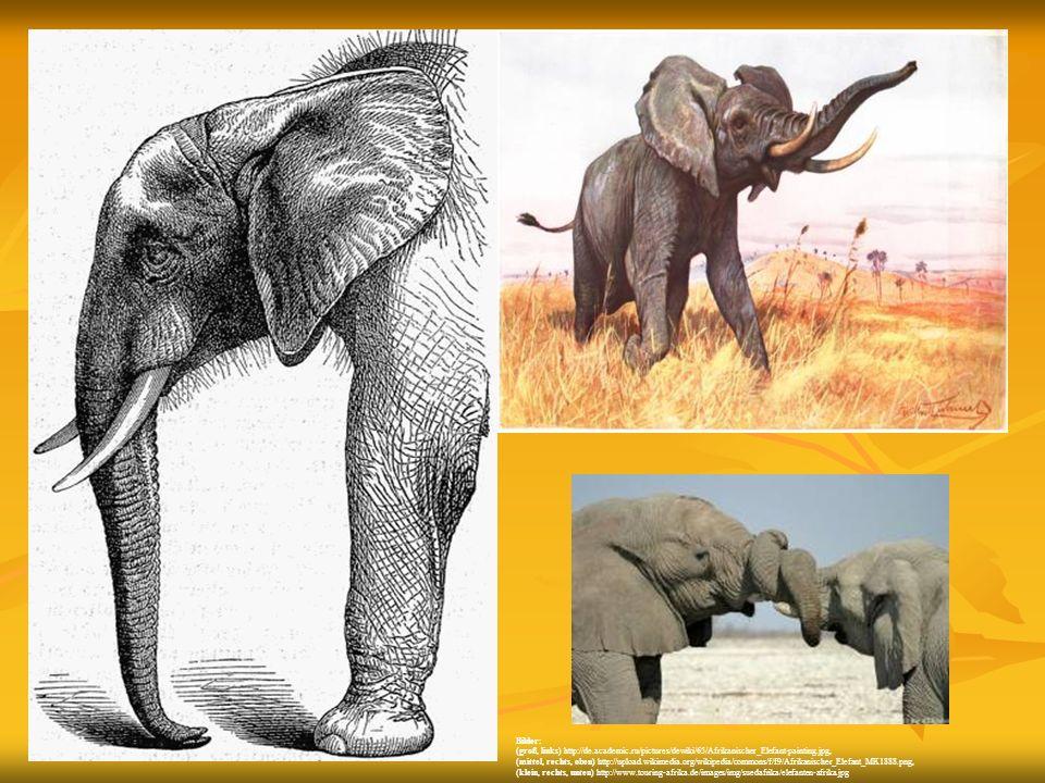 Bilder: (groß, links) http://de.academic.ru/pictures/dewiki/65/Afrikanischer_Elefant-painting.jpg, (mittel, rechts, oben) http://upload.wikimedia.org/