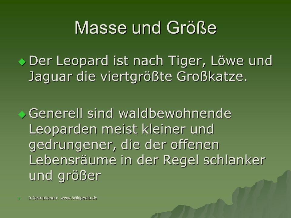 Masse und Größe Der Leopard ist nach Tiger, Löwe und Jaguar die viertgrößte Großkatze. Der Leopard ist nach Tiger, Löwe und Jaguar die viertgrößte Gro