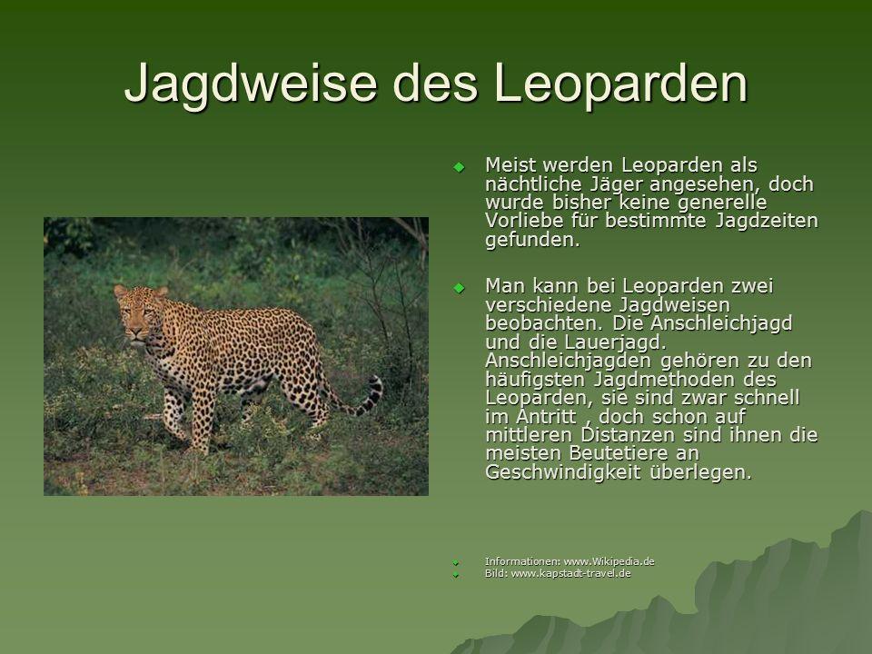 Jagdweise des Leoparden Meist werden Leoparden als nächtliche Jäger angesehen, doch wurde bisher keine generelle Vorliebe für bestimmte Jagdzeiten gef