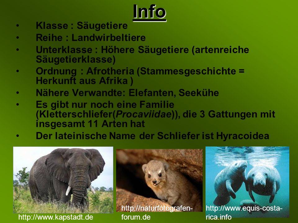 Info Klasse : Säugetiere Reihe : Landwirbeltiere Unterklasse : Höhere Säugetiere (artenreiche Säugetierklasse) Ordnung : Afrotheria (Stammesgeschichte = Herkunft aus Afrika ) Nähere Verwandte: Elefanten, Seekühe Es gibt nur noch eine Familie (Kletterschliefer(Procaviidae)), die 3 Gattungen mit insgesamt 11 Arten hat Der lateinische Name der Schliefer ist Hyracoidea http://naturfotografen- forum.de http://www.kapstadt.de http://www.equis-costa- rica.info