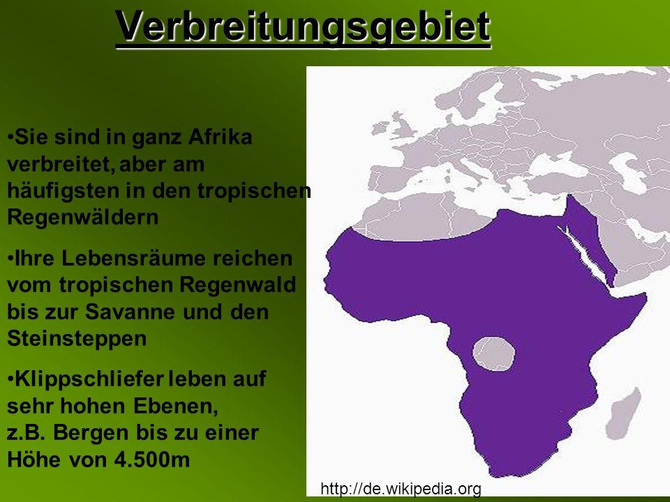 Verbreitungsgebiet http://de.wikipedia.org Sie sind in ganz Afrika verbreitet, aber am häufigsten in den tropischen Regenwäldern Ihre Lebensräume reichen vom tropischen Regenwald bis zur Savanne und den Steinsteppen Klippschliefer leben auf sehr hohen Ebenen, z.B.