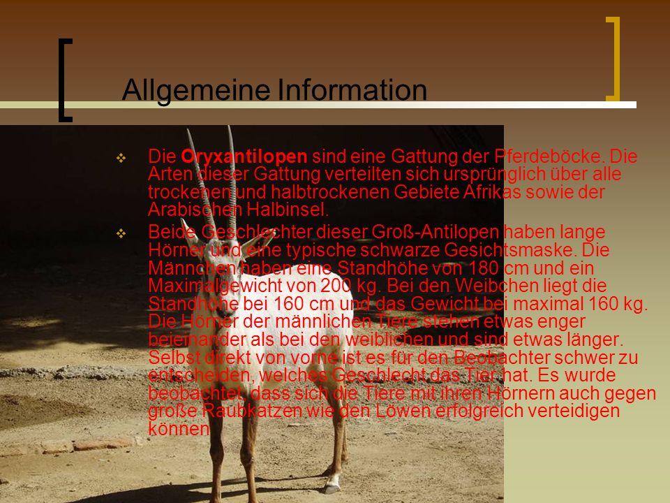 Allgemeine Information Die Oryxantilopen sind eine Gattung der Pferdeböcke. Die Arten dieser Gattung verteilten sich ursprünglich über alle trockenen