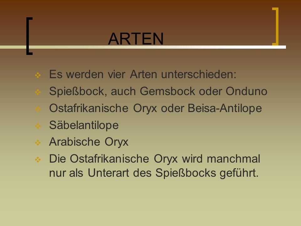 ARTEN Es werden vier Arten unterschieden: Spießbock, auch Gemsbock oder Onduno Ostafrikanische Oryx oder Beisa-Antilope Säbelantilope Arabische Oryx D