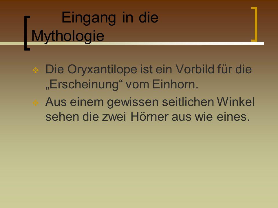 Eingang in die Mythologie Die Oryxantilope ist ein Vorbild für die Erscheinung vom Einhorn. Aus einem gewissen seitlichen Winkel sehen die zwei Hörner