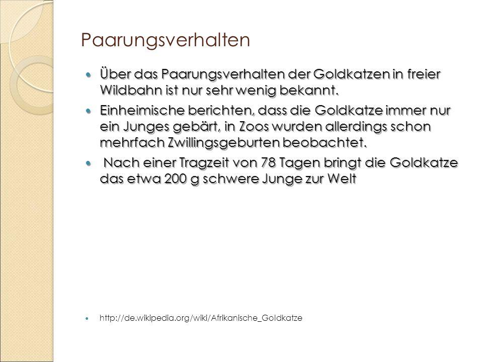 Paarungsverhalten Über das Paarungsverhalten der Goldkatzen in freier Wildbahn ist nur sehr wenig bekannt. Über das Paarungsverhalten der Goldkatzen i