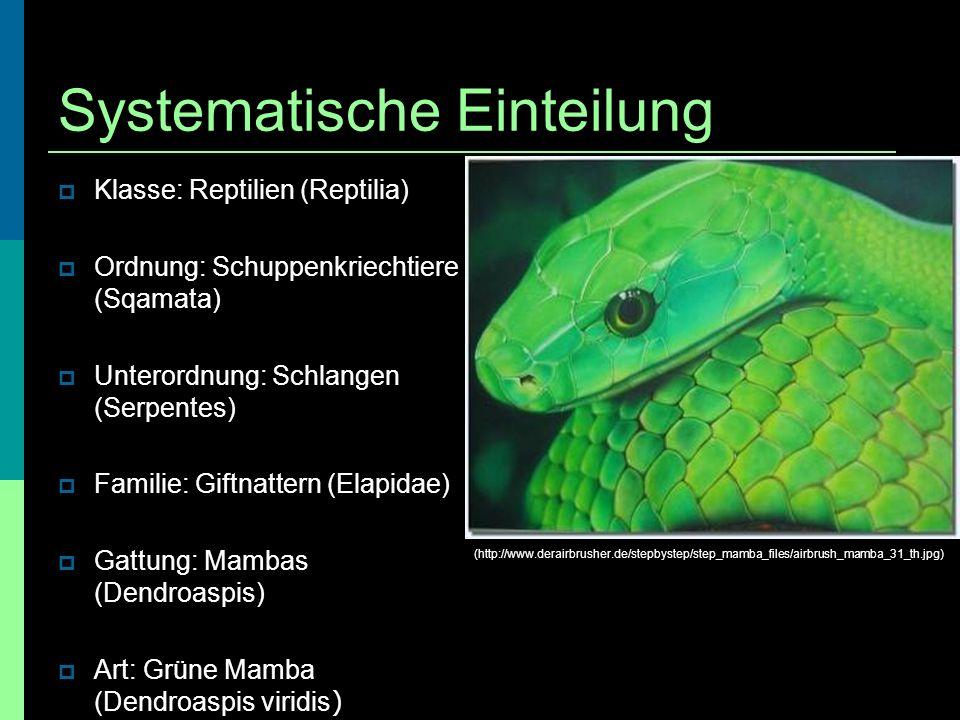 Systematische Einteilung Klasse: Reptilien (Reptilia) Ordnung: Schuppenkriechtiere (Sqamata) Unterordnung: Schlangen (Serpentes) Familie: Giftnattern