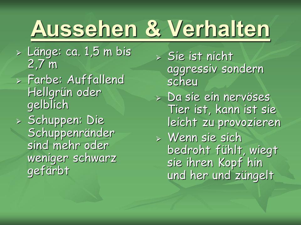 Aussehen & Verhalten Länge: ca. 1,5 m bis 2,7 m Länge: ca. 1,5 m bis 2,7 m Farbe: Auffallend Hellgrün oder gelblich Farbe: Auffallend Hellgrün oder ge