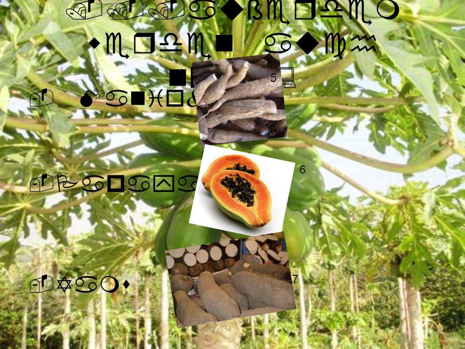 -Hirse -SÜßkarto feln -Reis 8 9 10