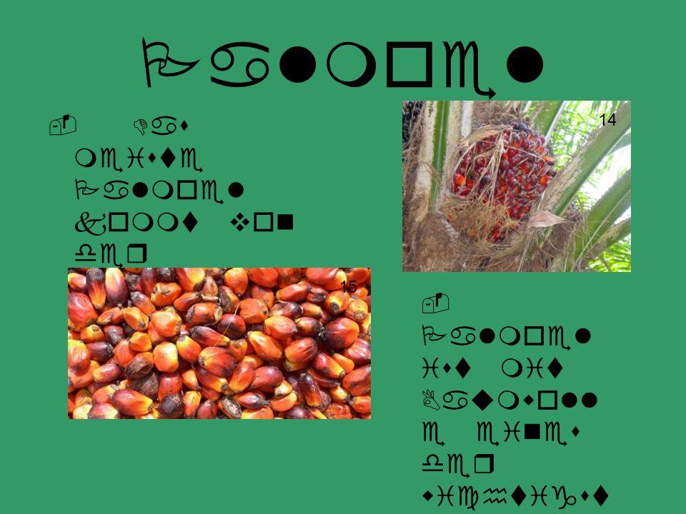Palmoel - Das meiste Palmoel kommt von der westafrikan ischen Kueste. - Palmoel ist mit Baumwoll e eines der wichtigst en Produkt e in Benin 14 15