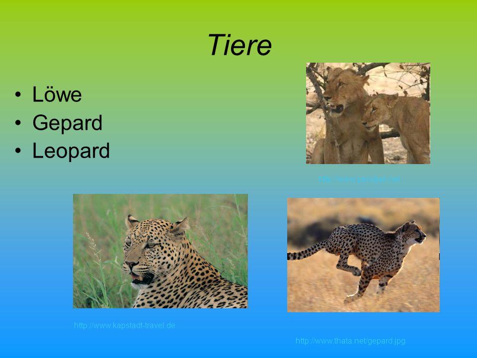 Tiere Hyänen Elefanten Flusspferd http://www.pendjari.net