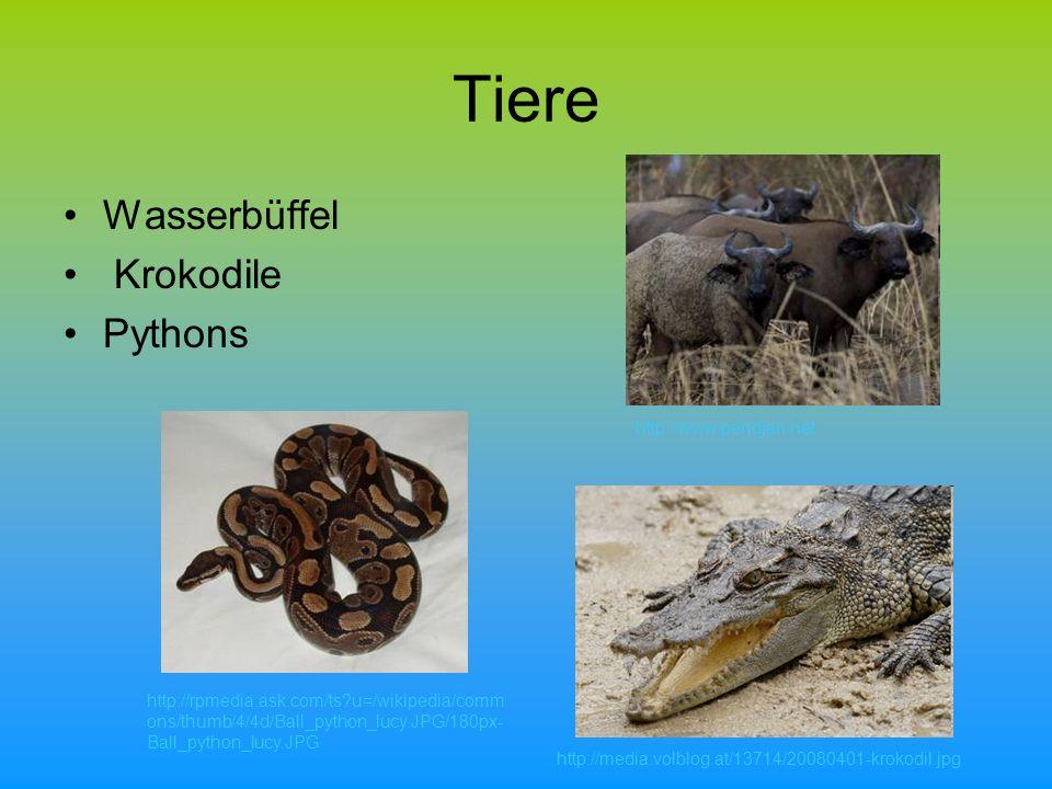 Tiere Wasserbüffel Krokodile Pythons http://media.volblog.at/13714/20080401-krokodil.jpg http://rpmedia.ask.com/ts?u=/wikipedia/comm ons/thumb/4/4d/Ball_python_lucy.JPG/180px- Ball_python_lucy.JPG http://www.pendjari.net