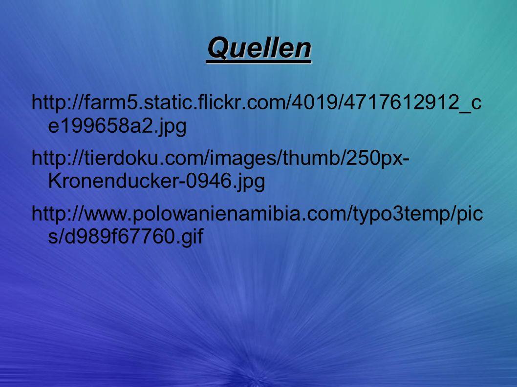 Quellen http://farm5.static.flickr.com/4019/4717612912_c e199658a2.jpg http://tierdoku.com/images/thumb/250px- Kronenducker-0946.jpg http://www.polowa