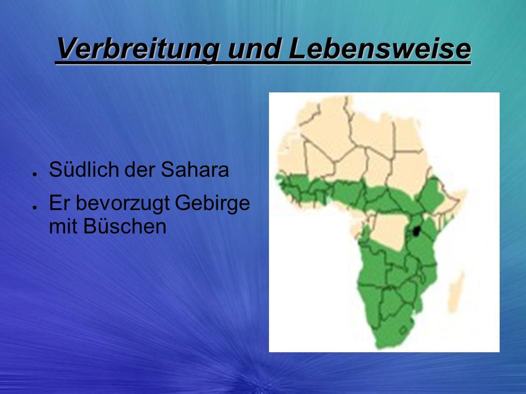 Verbreitung und Lebensweise Südlich der Sahara Er bevorzugt Gebirge mit Büschen