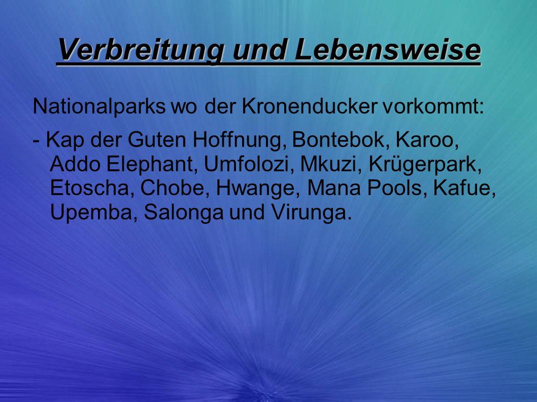 Verbreitung und Lebensweise Nationalparks wo der Kronenducker vorkommt: - Kap der Guten Hoffnung, Bontebok, Karoo, Addo Elephant, Umfolozi, Mkuzi, Krü