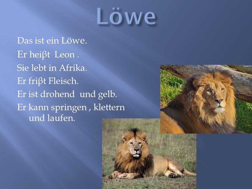 Das ist ein L öwe. Er hei β t Leon. Sie lebt in Afrika. Er fri β t Fleisch. Er ist drohend und gelb. Er kann springen, klettern und laufen.