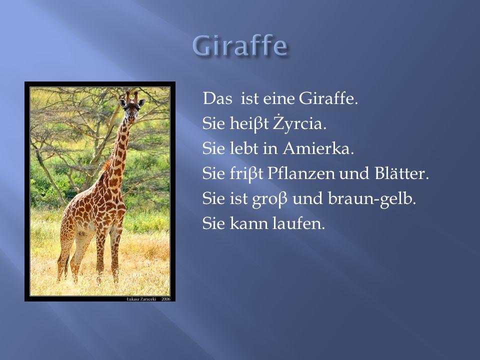 Das ist eine Giraffe. Sie hei β t Żyrcia. Sie lebt in Amierka. Sie fri β t Pflanzen und Blätter. Sie ist gro β und braun-gelb. Sie kann laufen.