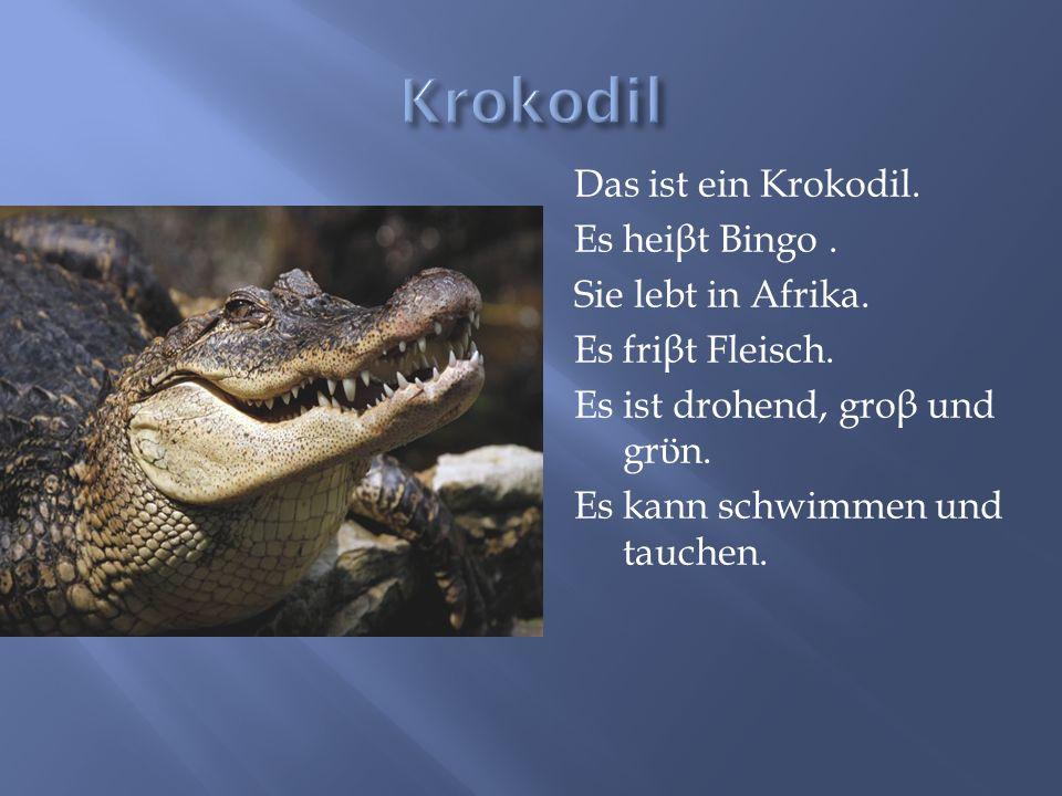 Das ist ein Krokodil. Es hei β t Bingo. Sie lebt in Afrika. Es fri β t Fleisch. Es ist drohend, gro β und gr ϋ n. Es kann schwimmen und tauchen.
