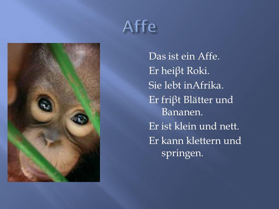 Das ist ein Affe. Er hei β t Roki. Sie lebt inAfrika. Er fri β t Blätter und Bananen. Er ist klein und nett. Er kann klettern und springen.