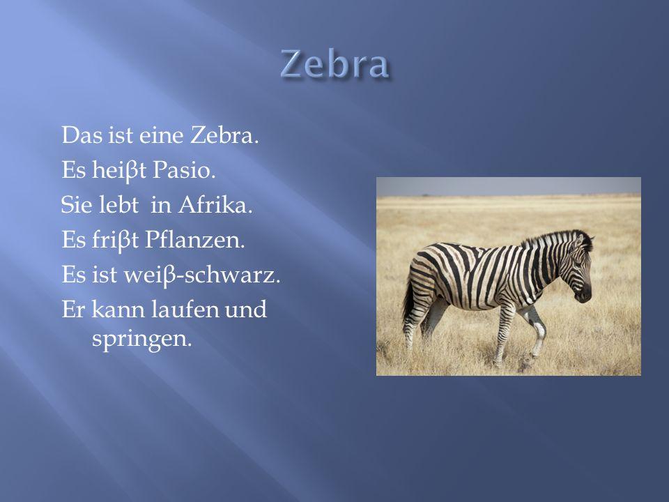 Das ist eine Zebra. Es hei β t Pasio. Sie lebt in Afrika. Es fri β t Pflanzen. Es ist wei β -schwarz. Er kann laufen und springen.