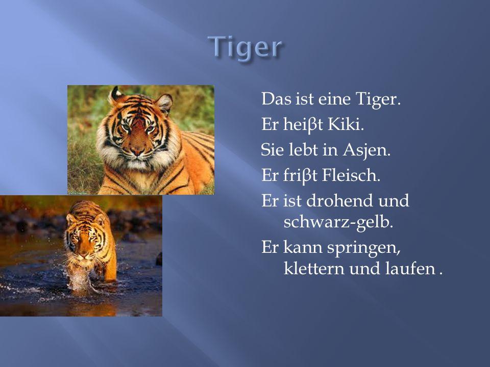 Das ist eine Tiger. Er hei β t Kiki. Sie lebt in Asjen. Er fri β t Fleisch. Er ist drohend und schwarz-gelb. Er kann springen, klettern und laufen.