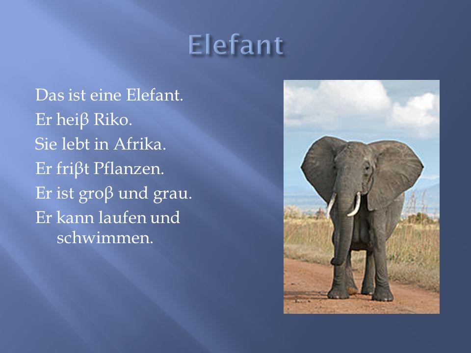 Das ist eine Elefant. Er hei β Riko. Sie lebt in Afrika. Er fri β t Pflanzen. Er ist gro β und grau. Er kann laufen und schwimmen.