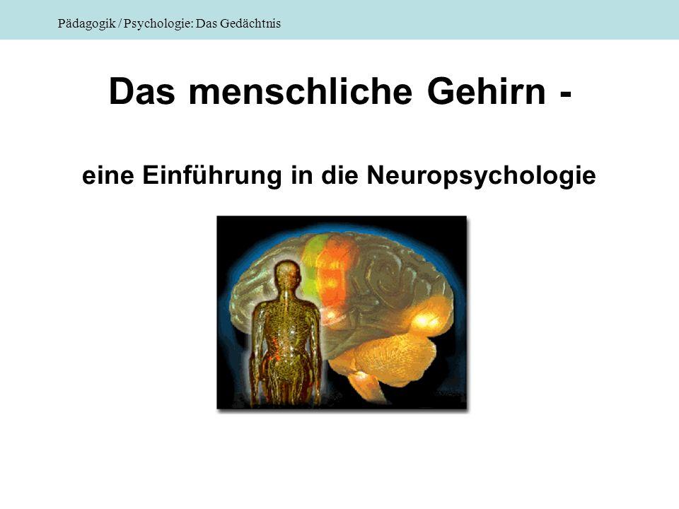 Pädagogik / Psychologie: Das Gedächtnis Das menschliche Gehirn - eine Einführung in die Neuropsychologie