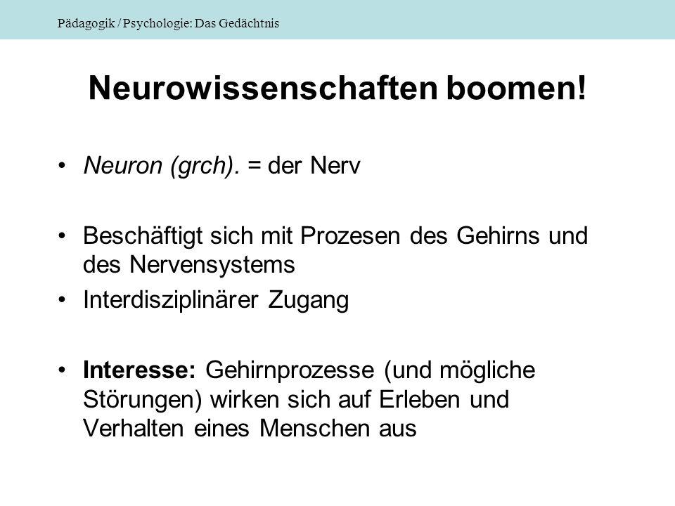 Pädagogik / Psychologie: Das Gedächtnis Neurowissenschaften boomen! Neuron (grch). = der Nerv Beschäftigt sich mit Prozesen des Gehirns und des Nerven