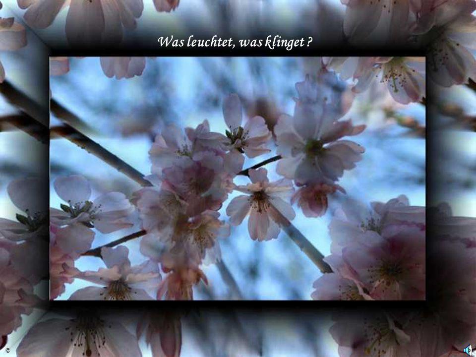 …der Frühling ist erwacht ! ©