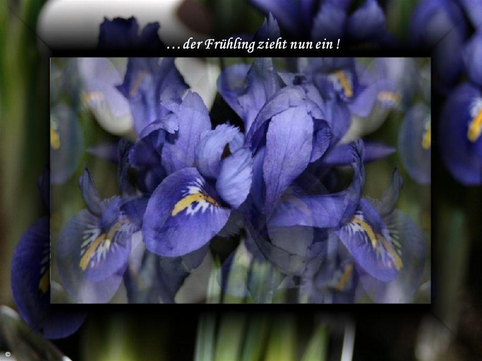 Der Frühling, der Frühling,… ©