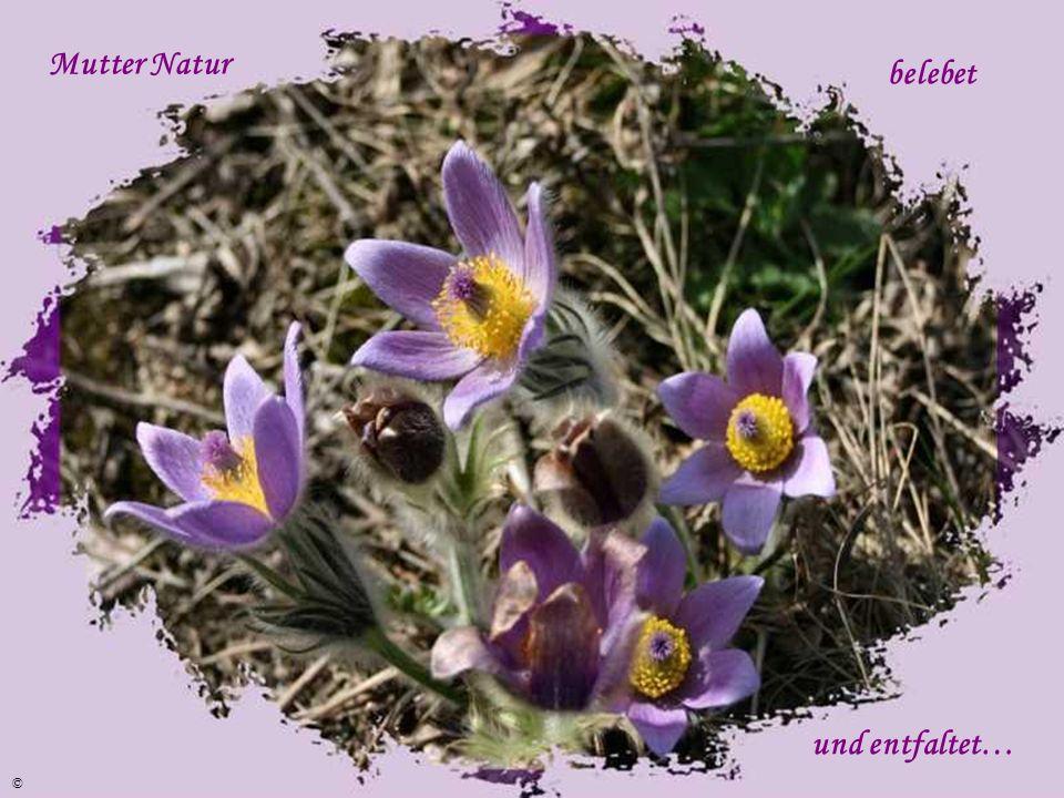 …der Frühling zieht nun ein ! ©