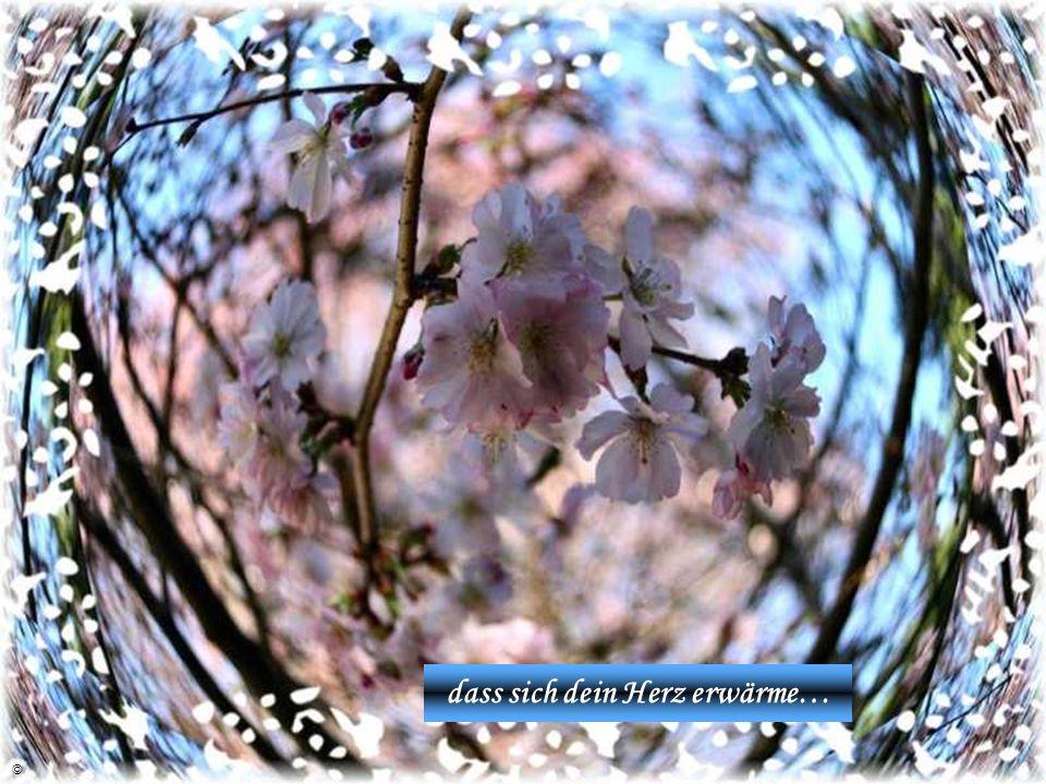 im Frühling jedes Jahr aufs neu,… ©