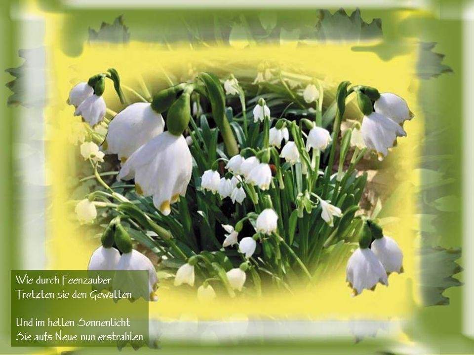 Blütenzauber im Frühling Sturmböen brausten nass und kalt Durch die jungen Triebe