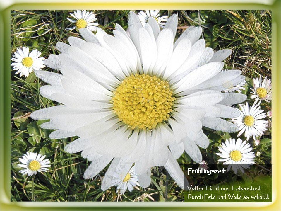 Mutter Natur belebet und entfaltet ihren Blütenzauber Im Frühling jedes Jahr aufs neu
