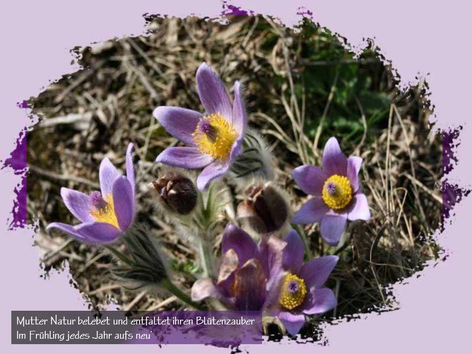 Was rauschet und was summet? Der Frühling, der Frühling. der Frühling zieht nun ein!