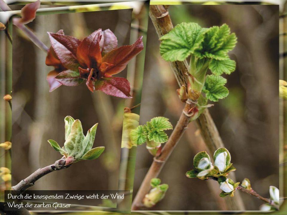 Durch die knospenden Zweige weht der Wind Wiegt die zarten Gräser
