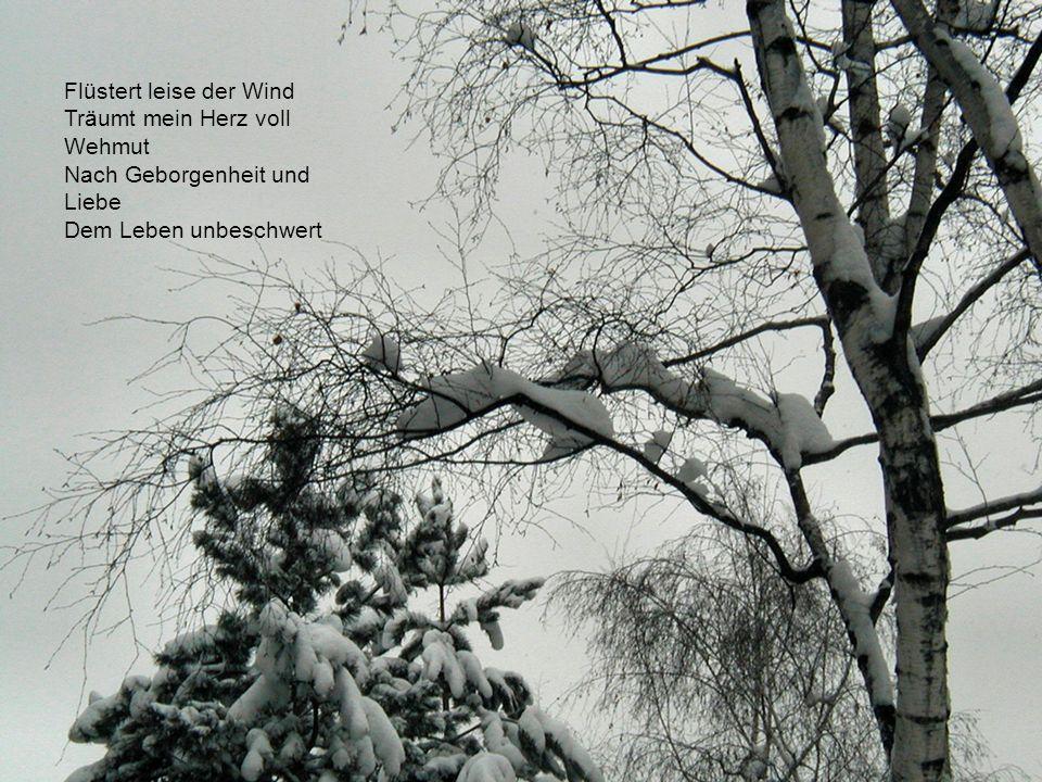 Zieht die Stille ein im Wald Eine Fülle aus Schnee und Licht Glitzert Raureif auf den Ästen Schweben Flocken zart